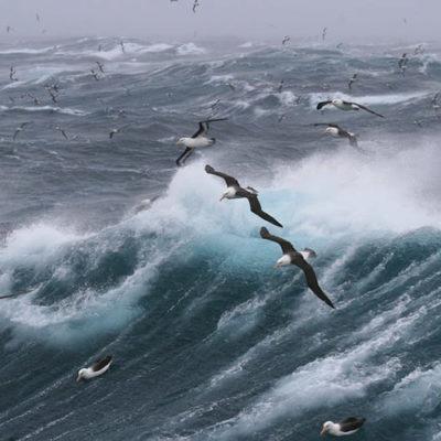 Albatross flying over wave in the sea