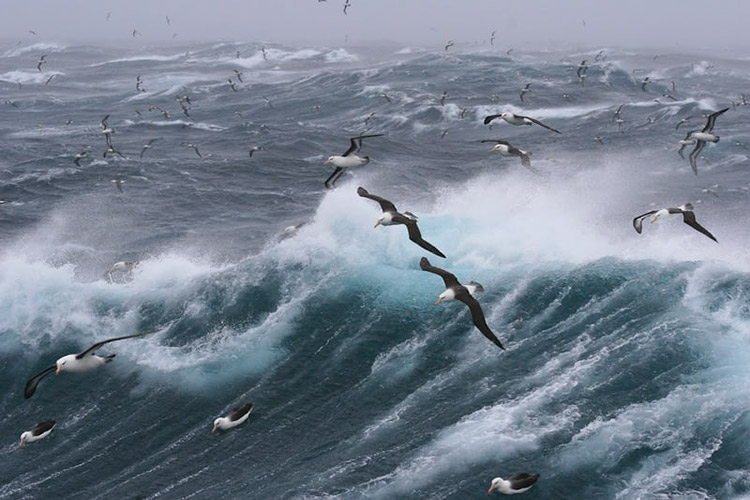 Albatross flying over wave in the sea